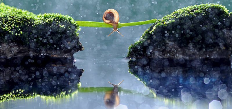 Snail on a twig above water
