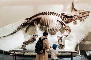 Dinosaur skeleton at a museum