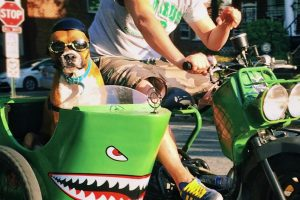 Dog in a sidecar